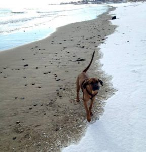 Lucas' dog Arlo, a hound mix