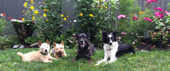 Kelsey McIntyre's Four Dogs