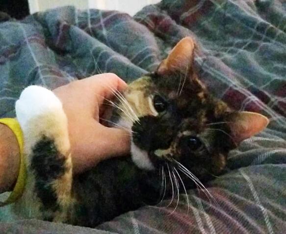 Garcie A. Pawrra, Greg's cat