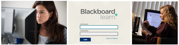 How to Take an Online Course at UNE, featuring Blackboard