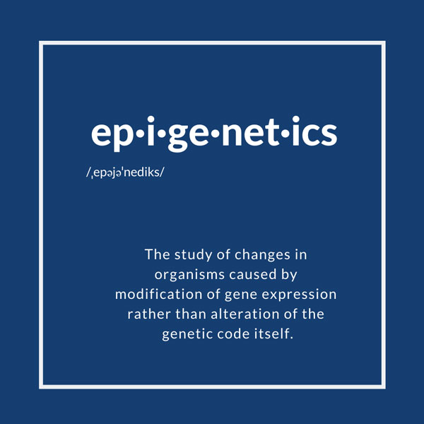 Definition of Epigenetics: The study of changes in organisms caused by modification of gene expression rather than alteration of the genetic code itself.