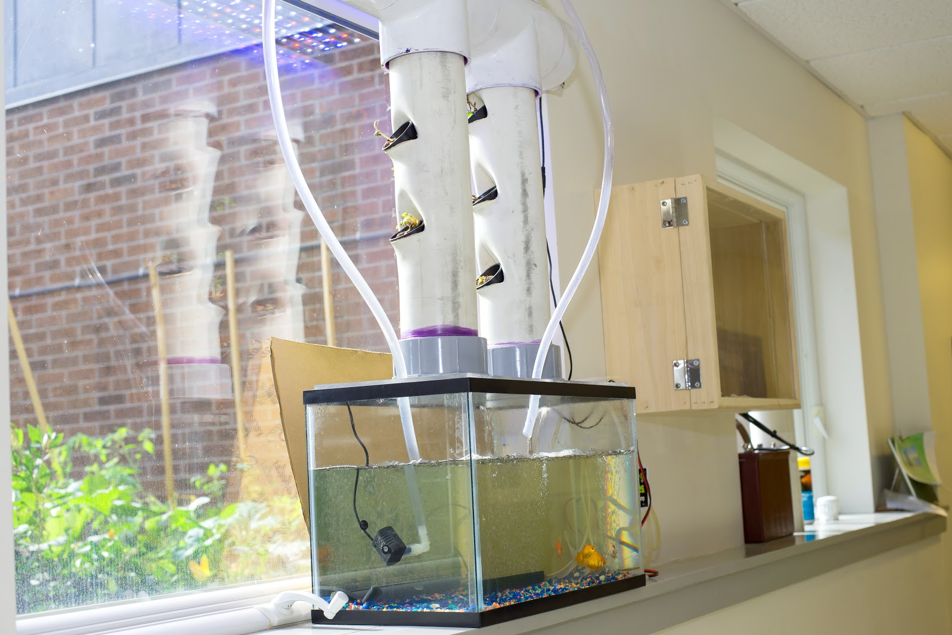 A hydroponic tank in a classroom