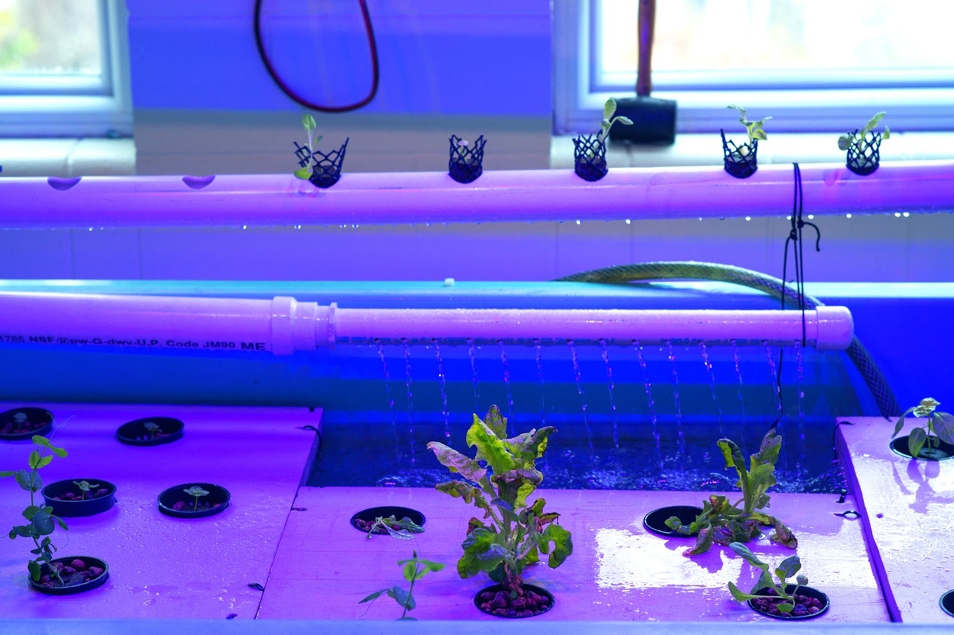 A tank with pipes and plants to showcase hydroponics