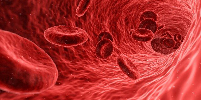 blood flow in a circulatory system