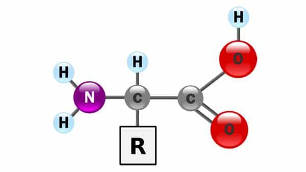 Molecular biology amino acid diagram