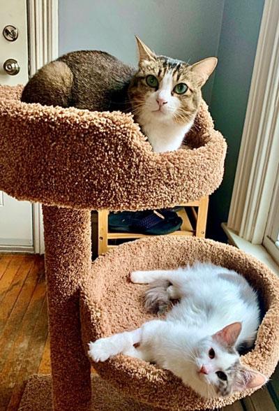 Fiona Mokry's cats, Bunny and Minnosh