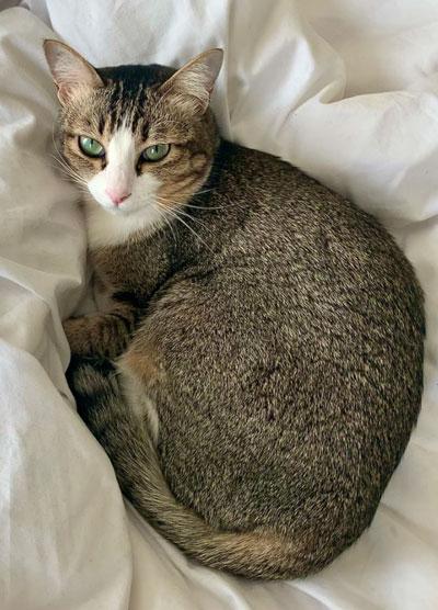 Fiona Mokry's cat, Bunny