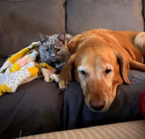 Smokey the cat and Moz the dog