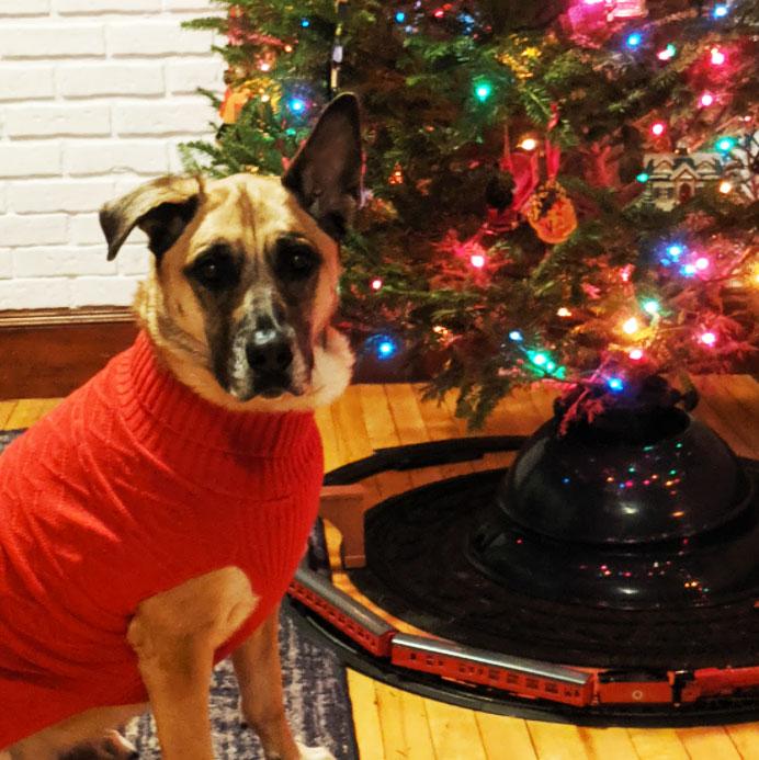 Emily Taylor's dog Moxie, a German Shepherd Husky Mastiff Mx